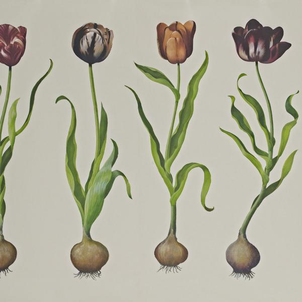 TulipsWallpaper1
