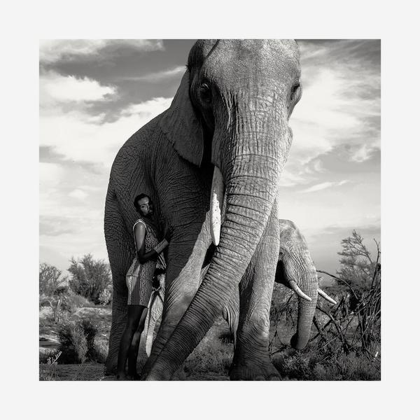 Elephant_Admiration_Artwork